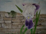 Iris and Stone Wall